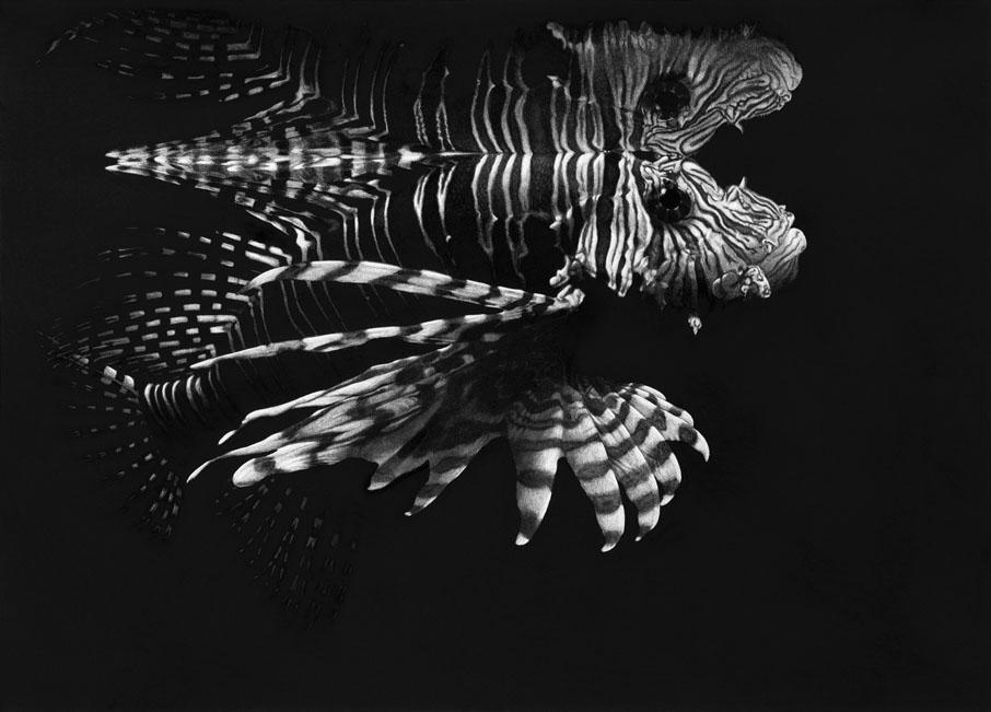 Tamara Pokorny - Reflection / Feuerfisch Platz1